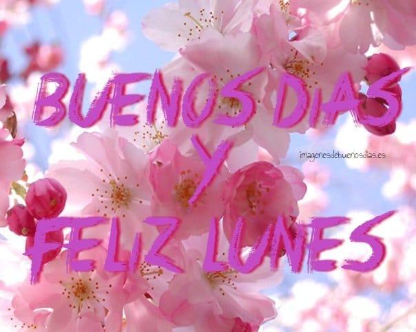 Feliz Lunes Con Flores Imágenesdebuenosdiases